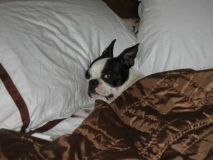 Louis' sleep issues were easily resolved by raising the thread count of his sheets
