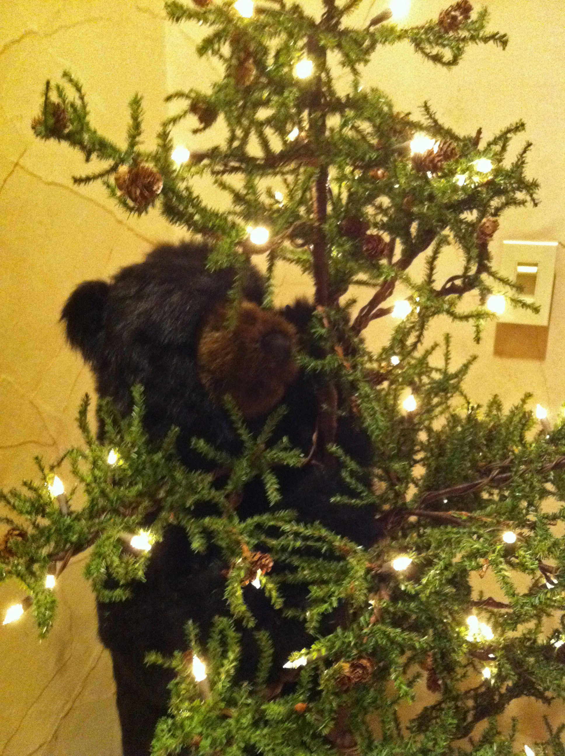 The Beverly Hills Mom » Precious black bear climbing a Christmas ...