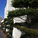 Fun design element at 20th Century Fox lot - tornado pruned topiaries!