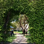 This arbor hedge on the Fox lot makes one want to see what's on the other side...